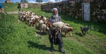 5 bin lira aylığa çalışacak çoban bulamıyorlar