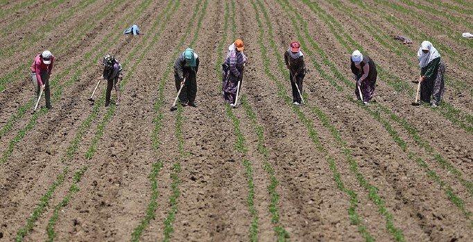 Tarım ÜFE Mart'ta arttı