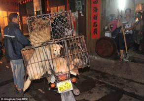 Çinde Festival Adı Altında Köpek Katliamı