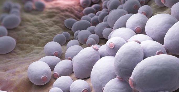 Enfeksiyonlara karşı candida beslenmesi