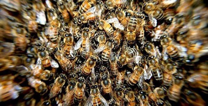 Tunceli'de arıların saldırısına uğrayan bir kişi öldü
