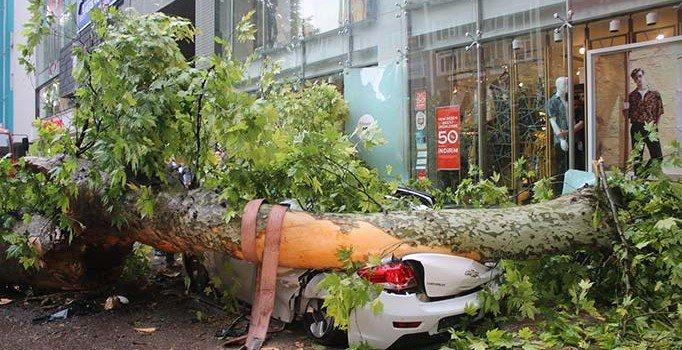 Kocaeli'de çınar ağacı yola devrildi: 1 yaralı